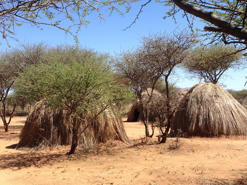 huts cheetah walk