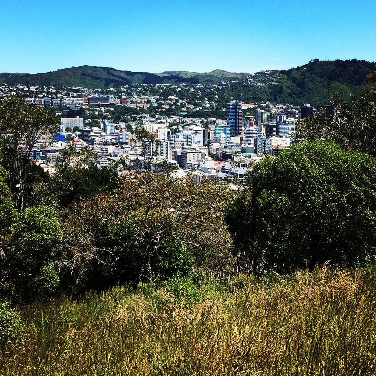 things to do in wellington the wellington lookout