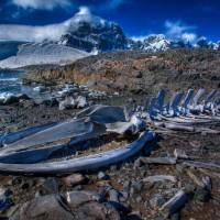 whale-bones-antarctica