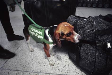 don't pat the security dogs at the airport