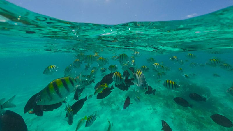 what to do in the cayman island snorkelling