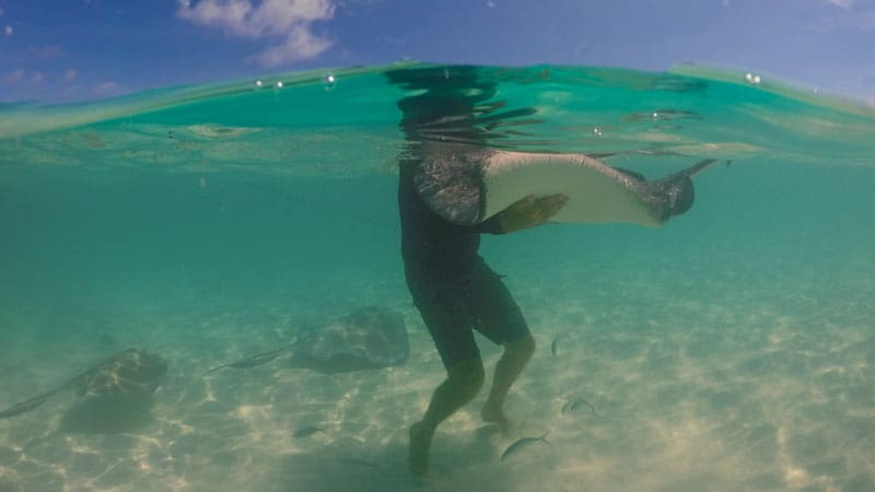 sting ray city things to do in the cayman islands