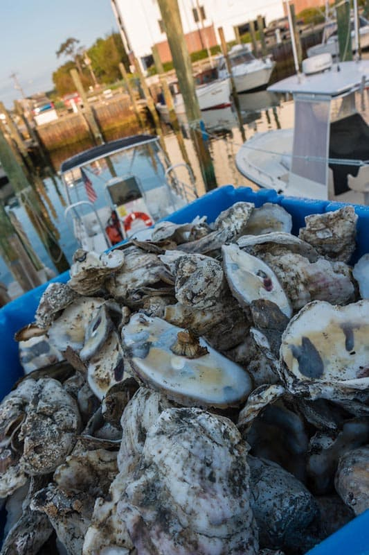 places to eat in virginia beach VA oysters