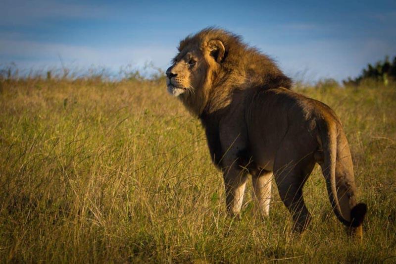 big five safari africa