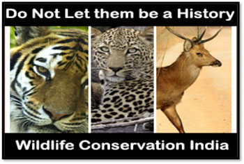 wildlife conservation in india