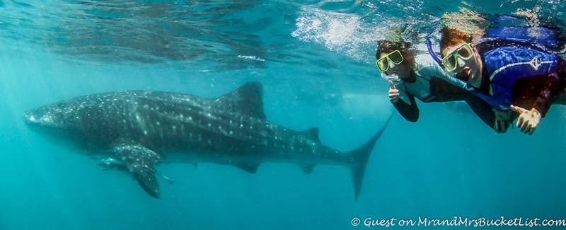 western australia wildlife whale shark