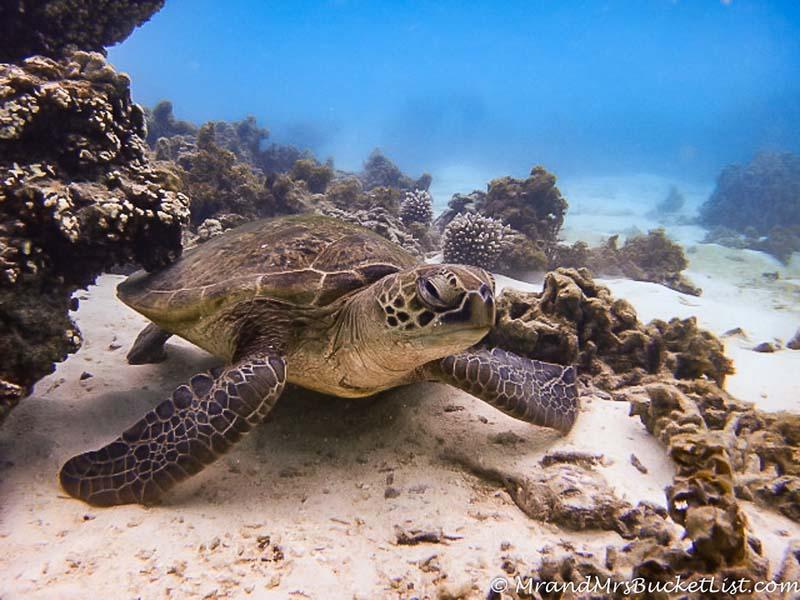 wildlife encounters in Western Australia - sea turtles