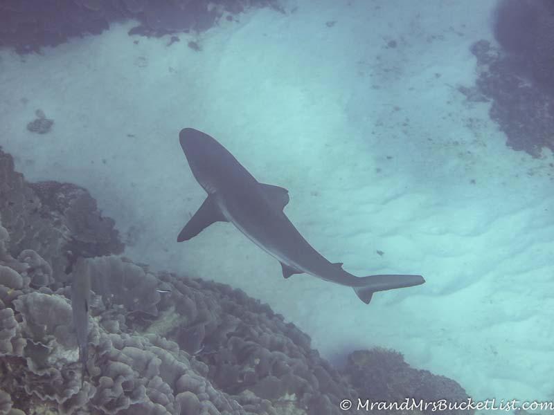 wildlife encounters in Western Australia - sharks