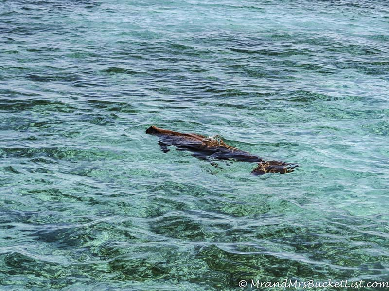 wildlife encounters in Western Australia - dugong