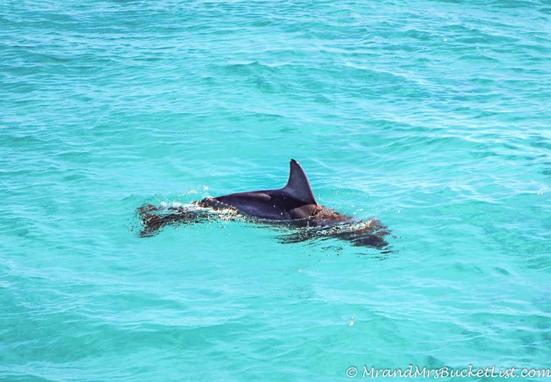 wildlife encounters in Western Australia - dolphins