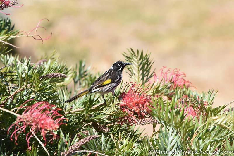wildlife encounters in Western Australia - birds