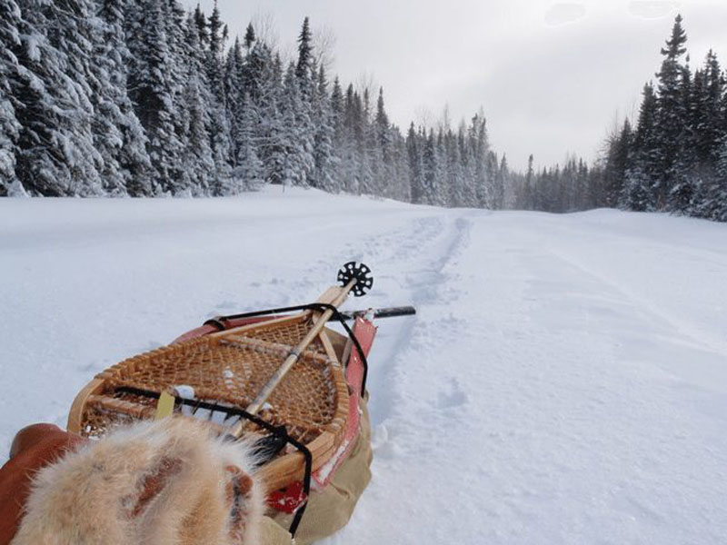 sled in the winter