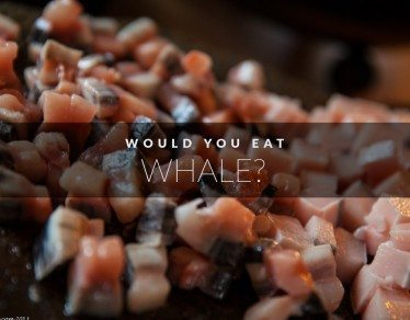 would-you-eat-whale