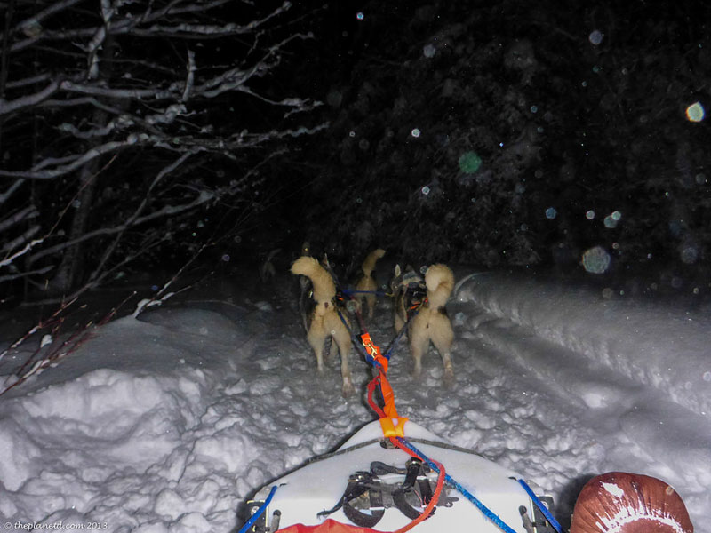 yukon quest training sled