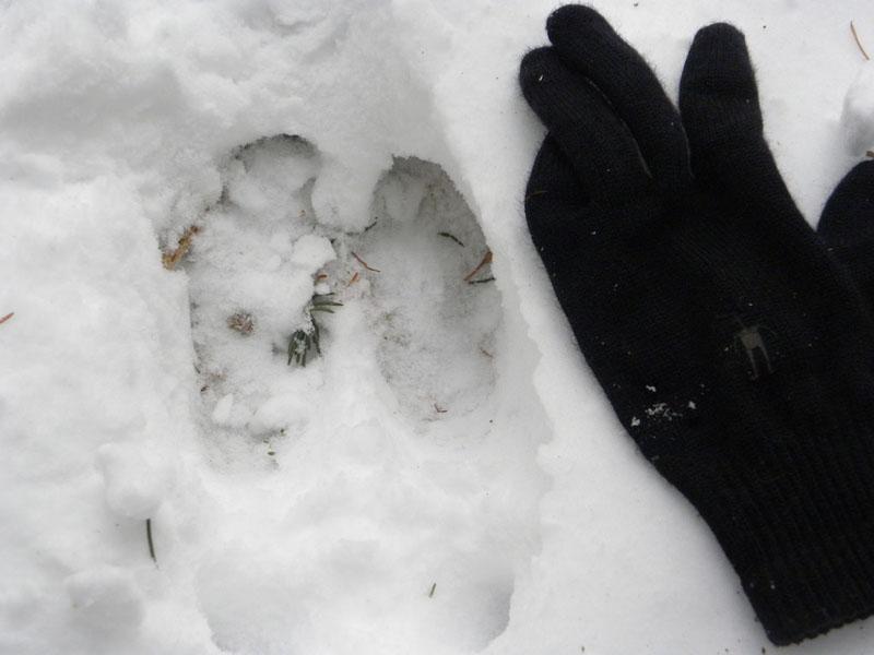 moose tracks yukon