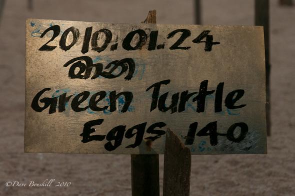Eggs incubating