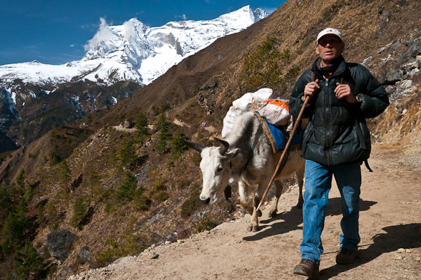 The Yak herders walk faithfully along with their team.