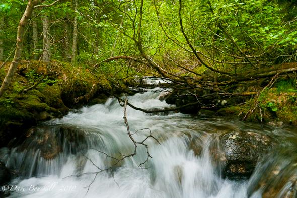 The Flora And Fauna Of Alaska A Photostory