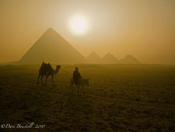 Man and camel at sunrise of Pyramids of Giza