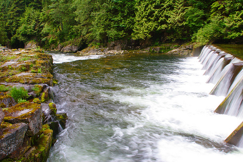 Salmon hatchery in capilano canyon