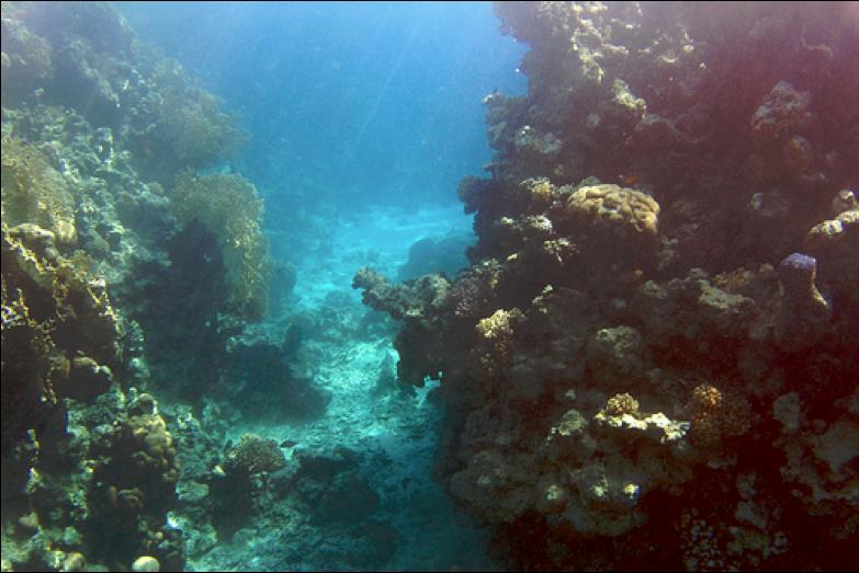 scuba dive the world