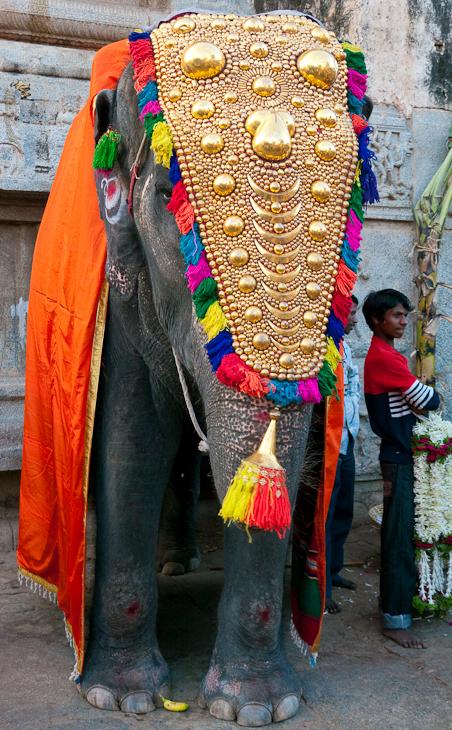 Asian elephant festival