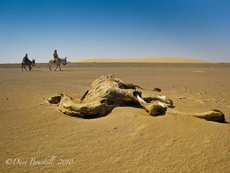 Camel Desert in Sudan, Africa