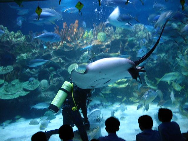 aquaria-kuala-lumpur-malaysia