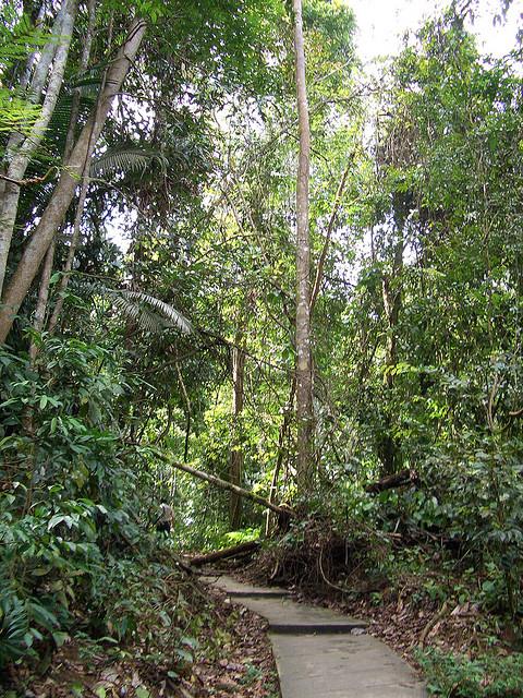 bukit-nanas-forest-kl